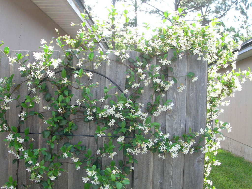 all things lovely backyard climbers